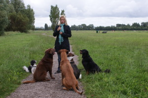 Eefje has a group of dogs paying attention