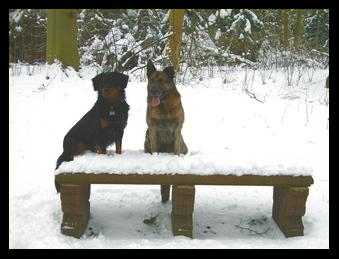 James en vriend op bank in de sneeuw