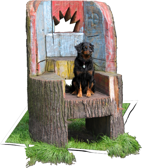 Therapy dog James sitting on a big chair made out of a stump in the woods