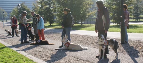 medewerkers DogLogix helpen Stichting Signaalhond