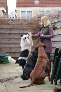 Trainen van hond met afleiding