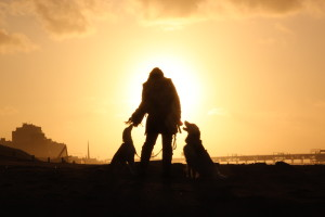 dog walking service on the beach at sunset