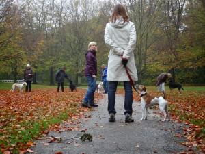 volgen tussen honden door
