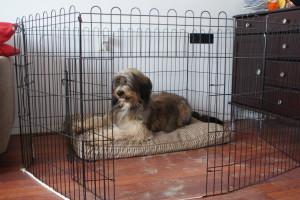 Joris op zijn plaats in de hondenren