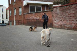 uitvallen naar een hond