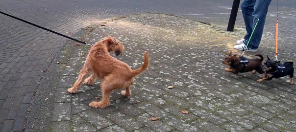 eigenaar lijkt op hond